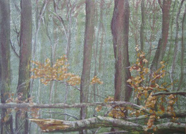 Buchenzweige im Winterwald , 2007