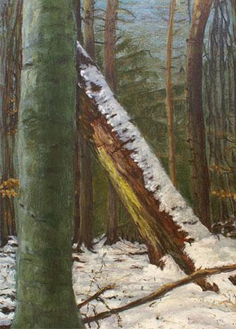 Buche und Fichte im Winterwald , 2007