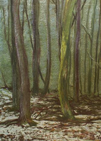Winterwald an der Hohen Wurzel, 2007