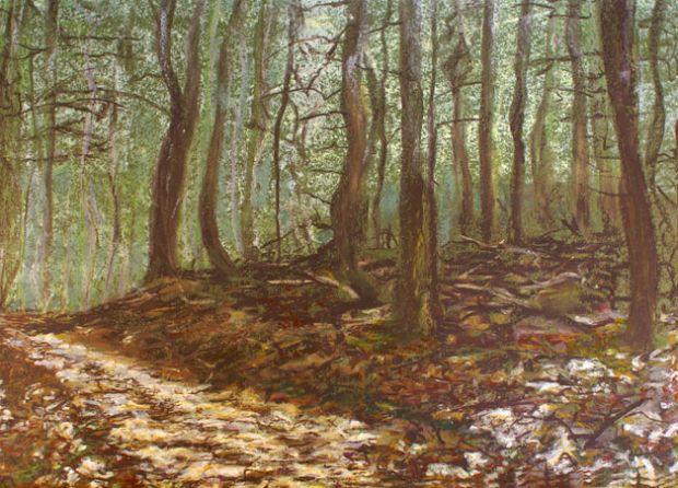 Erster Sonnenstrahl im Winterwald , 2007
